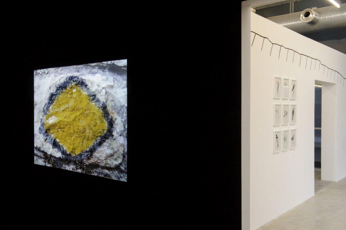 Vue-exposition-Camp-Catalogue-credit-La-Kunsthalle-7